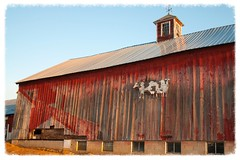 Silver Farm (DjD-567) Tags: red barn silver cattle cows farm nh cupola dairy boscawen