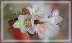 FLORES CON DESTELLOS (Angelines3) Tags: flores colores juevesdeflores destellosdelente