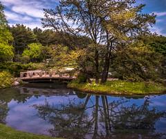 Reflection (Florencetale) Tags: park bridge trees summer sky lake reflection tree nature water garden paradise branches tranquility zen relaxation botanicalgarden