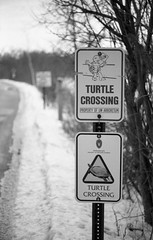 Turtle Crossing (bgu42) Tags: kentmere100 pentax p3 epsonv550 film analog analogue kentmerefilms
