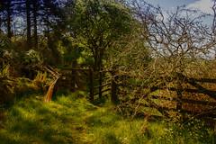 (morag.darby) Tags: tree grass sunshine digital rural landscape scotland countryside nikon gate nikkor countrycode d3300