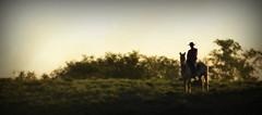 Das sombras (Eduardo Amorim) Tags: sunset brazil horses horse southamerica brasil caballo cheval atardecer caballos tramonto sonnenuntergang prdosol cavalos pelotas pferde cavalli cavallo cavalo gauchos pferd riograndedosul poniente anoitecer coucherdesoleil brsil chevaux gaucho cavall entardecer crepsculo amricadosul poente gacho amriquedusud gachos sudamrica suramrica amricadelsur sdamerika costadoce americadelsud americameridionale eduardoamorim