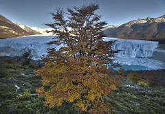 Otoo lengal en el glaciar. (JLH PHOTO) Tags: patagonia del sur torresdelpaine australis torres paine magallanes patagonica parquenacionaltorresdelpaine terrae campodehielosur magallanica paisajechileno regiondemagallanes terraaustralis camposdehielo suraustral tierraaustral patagoniacl pntdp