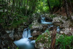 Flows (Naebula) Tags: wood longexposure verde green water forest 35mm lens woods nikon rocks outdoor fiume soviet flowing rocce acqua silky bosco torrente longexposition setosa longexpo lungaesposizione nd1000 d700 mir24n35mmf2