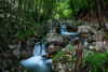 Flows (Naebula) Tags: wood longexposure verde green water forest 35mm lens woods nikon rocks outdoor fiume soviet flowing rocce acqua silky bosco torrente longexposition setosa longexpo lungaesposizione nd1000 d700 mir24n35mmf2