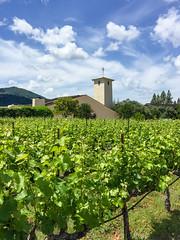 Mondavi (dalecruse) Tags: california green us vineyard unitedstates wine winery vineyards grapes grape oakville mondavi wines lightroom robertmondavi mondavivineyards