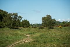 Ryton Willows (sunsetbeach) Tags: willowtrees inthesunshine rytonwillows