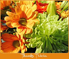 """""""By the way, Im wearing the smile that you gave me."""" (Trinimusic2008 -blessings) Tags: uk flowers nature dedication petals brighton card tricia trinimusic2008 judymeikle"""