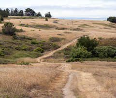 Pathway I (Joe Josephs: 2,650,890 views - thank you) Tags: california walking hiking pinetrees californiacoast fineartphotography californiacentralcoast cambriacalifornia travelphotography californialandscape pineforests outdoorphotography fineartprints fiscaliniranch fiscaliniranchpreserve