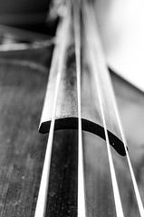 Music (stefan_wolpert) Tags: wood blackandwhite music stilllife closeup rehearsal bass band strings blackandwhitephotography uprightbass kontrabass acousticbass