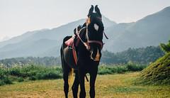 Kalpetta_India-0803.jpg (walkershiggins) Tags: bonderman india kalpetta