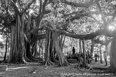 Palermo (Lord Seth) Tags: bw italy nikon candid streetphotography palermo sicilia biancoenero baobab 2015 giardinobotanico d5000 lordseth