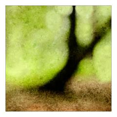 TREE IMPRESSION (Stan Farrow Photography) Tags: tree impression texture focus tayport mortonlochs