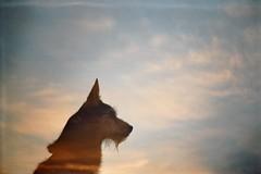 (AirSonka) Tags: sky dog film silhouette analog 35mm lomo dusk doubleexposure toycamera multipleexposure analogue smena smena8m doubleexposed pelcula filmphotography pellicule kodakgold200 doppelbelichtung miromil