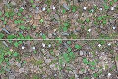 A projection on Plot 3, Rep. 1 (Yugra State University) Tags: decomposition greentea carboncycle raisedbog massloss mukhrinofieldstation roiboostea teabagindex teacomposition standardisedplantlitter