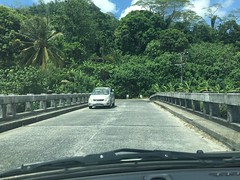 The jungle on the island of Pohnpei.