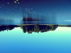 Upsidedown (petri.solja) Tags: sky lake plant reflection water island mirror pond forrest upsidedown reflect mirrorimage waterplant glimmering fotor fotorapp