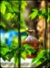 In forggoten garden (koliru) Tags: beauty digital garden colorfull olympus e300 concept 50200mm zuiko boken