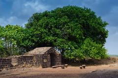 Artillery area on Vijaydurg Fort (keyaart) Tags: trees nature fruit fort konkan vijaydurg