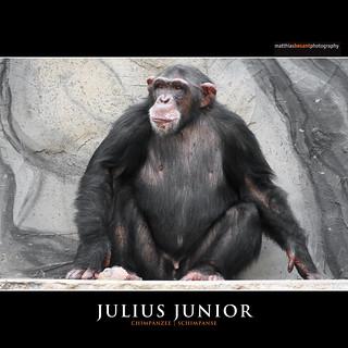 JULIUS JUNIOR