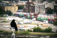The handsome crow at Port of Vancouver  (Canada Place) (TOTORORO.RORO) Tags: canada architecture vancouver port buildings bokeh trains cargo crow