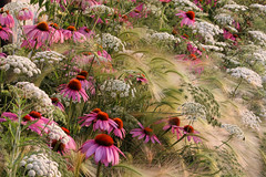 Flowered Garden Prairie (irecyclart) Tags: green kew garden landscape photography photographer gardening year contest competition images pots international planet biodiversity igpoty