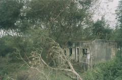 living in ruins. (larissanunesdealbuquerque) Tags: