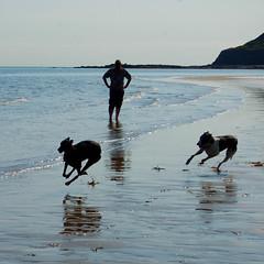 150812 Cayton Bay-0187 (whitbywoof) Tags: pixie keela killalaluckie rescue pet dog retired racer pedigree greyhound accoladehounds