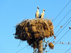 Storks on their nest (ali eminov) Tags: outdoors polyanovo markomale bulgaria bulgaristan nests birds storks