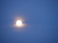 ** Lune de canicule ** (Impatience_1 ( Peu...ou moins présente... )) Tags: lune moon ciel sky canicule hotwave m impatience supershot coth coth5 sunrays5 citrit abigfave alittlebeauty paysage landscape