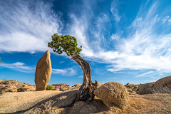 Sony A7RII Spring Wildflowers Fine Art Joshua Tree National Park! Dr. Elliot McGucken Fine Art Landscape  Photography!  Sony A7R2 & Sony 16-35mm Vario-Tessar T FE F4 ZA OSS E-Mount Lens! (45SURF Hero's Odyssey Mythology Landscapes & Godde) Tags: nature fineart a7 fineartphotography naturephotography sonnar wideanglelens naturephotos tfe fineartphotos a7r fineartphotographer fineartnature sonya7 elliotmcgucken sonya7r elliotmcguckenphotography elliotmcguckenfineart sonya7rii a7rii a7r2 55mmf18zalens sonya7r2 masterfineartphotography sonya7riisony1635mmvariotessartfef4zaossemountlensdrelliotmcguckenfineartphotographywideangle
