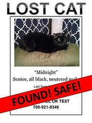 Midnight has been found! (Hospice Hearts) Tags: rescue cats thanks cat found illinois feline thankyou il foster midnight animalrescue tuesday urbana grateful felines champaign safe volunteer adopt nonprofit june28 62816 hospicehearts wwwhospiceheartsorg june282016