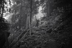Gstaad - Rinderberg (BE) (Toni_V) Tags: wood bw mist monochrome rain fog forest schweiz switzerland blackwhite europe dof nebel suisse bokeh hiking rangefinder trail bern mp svizzera schwarzweiss sentiero wald regen wanderung wanderweg berneroberland berneseoberland randonne 2016 svizra escursione sep2 summiluxm leicam 35mmf14asph digitalrangefinder niksoftware 35lux messsucher 160702 silverefexpro2 35mmf14asphfle typ240 toniv m2400458 gstaadrinderbergststephan