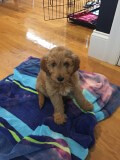 Moffitt in his new home!  He is one of Dakota and Nolan's little boys!