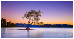 Dreamcatcher (Larissa Dening) Tags: blue autumn winter newzealand summer mountains tree water sunrise solitude alone colours purple nz southisland wanaka tranquil lakewanaka