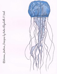"""Fluidity"" Jellyfish (Moana Matron) Tags: art nature animal illustration pen ink design jellyfish artist drawing marinebiology dots markers copic tentacles micron pointillism stippling cnidaria copicmarkers"