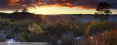 Sunrise In The Aussie Scrub || BLACKHEATH (rhyspope) Tags: sunset sky cloud plant color colour tree nature sunrise canon bush blackheath australia bluemountains lookout aussie shrub scrub blend 500d rhyspope