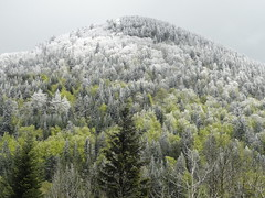 New snow fall in the Alps - End of May (Hlne_D) Tags: park cloud white snow plant france alps tree green fog alpes grenoble plante landscape vert neige nuage paysage arbre parc blanc brouillard alongtheroad isre rhnealpes parcnaturelrgionalduvercors coldelacroixhaute pnrvercors hlned croixhaute coldefau