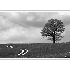 """-,, (horstmall) Tags: tree maple arbre baum schwäbischealb ahorn acercampestre donnstetten maddre horstmall"
