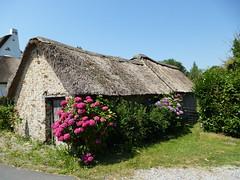 St Joachim - Chaumière Briéronne (PatMargat) Tags: france maison campagne parc hortensia naturel chaume chaumière loireatlantique régional toitdechaume lagrandebrière chaumièrebriéronne pnrgrandebrière