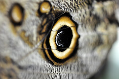_DSC7778 (DarrenBaileyLRPS) Tags: macro butterfly insect photography spider nikon dragonfly wildlife web wing snail insects colourful extrememacro dbailey creatiive darrenbailey darrenbaileyart