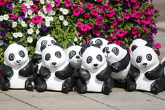 919C1038 (HuNosBlues) Tags: panda mainz wwf 1600pandas canoneos5dmarkiii