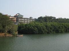 STA_0316 (Sanand Karunakaran) Tags: india kerala mangrove mangroves sanandkarun sanandkarunakaran