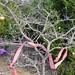 Trees_of_Loop_360_2013_029