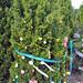 Trees_of_Loop_360_2013_095