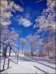Cloudinaround (Geo_grafics) Tags: trees cloud white snow newmexico tree nature clouds nikon gate thumbsup 15challengeswinner favescontestwinner challengegamewinner fotocompetition fotocompetitionbronze agcgwinner favescontestfavored