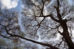 20121003_1143 (Zalacain) Tags: africa tree kenya laketurkana loyangalani