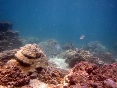 IMG_9096 (milewski) Tags: ocean water underwater salt scuba diving scubadiving saltwater underwaterphotography oceanphotography