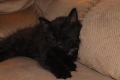 Our new Cat Shadow (William Wilson loves Belinda) Tags: shadow pet comfortable cat kitten sassy niagarafallsny vision:outdoor=079