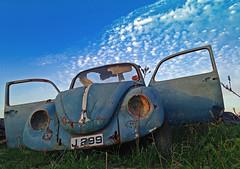 Fly up in sky, little Beetle, into heaven (Matthias-Hillen) Tags: blue cars abandoned car vw volkswagen rust beetle rusty matthias oldtimer dashboard blau wreck rost rostig käfer hillen restinpeace schrott wrack autofriedhof outtopasture schrottplatz autowrack classik dornröschenschlaf carcementery matthiashillen